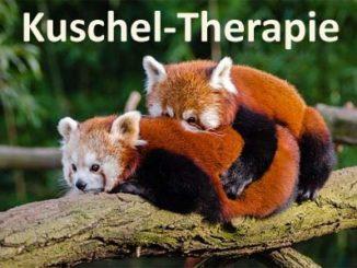 kuschel-therapie