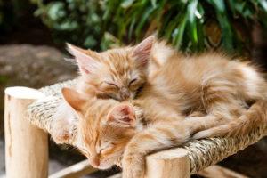 gesunder schlaf in der partnerschaft