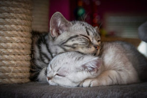 schlaf ist wichtig